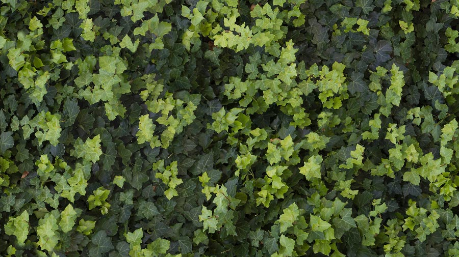 Green Tech by Casalgrande Padana, pollution-proof leaves in porcelain stoneware