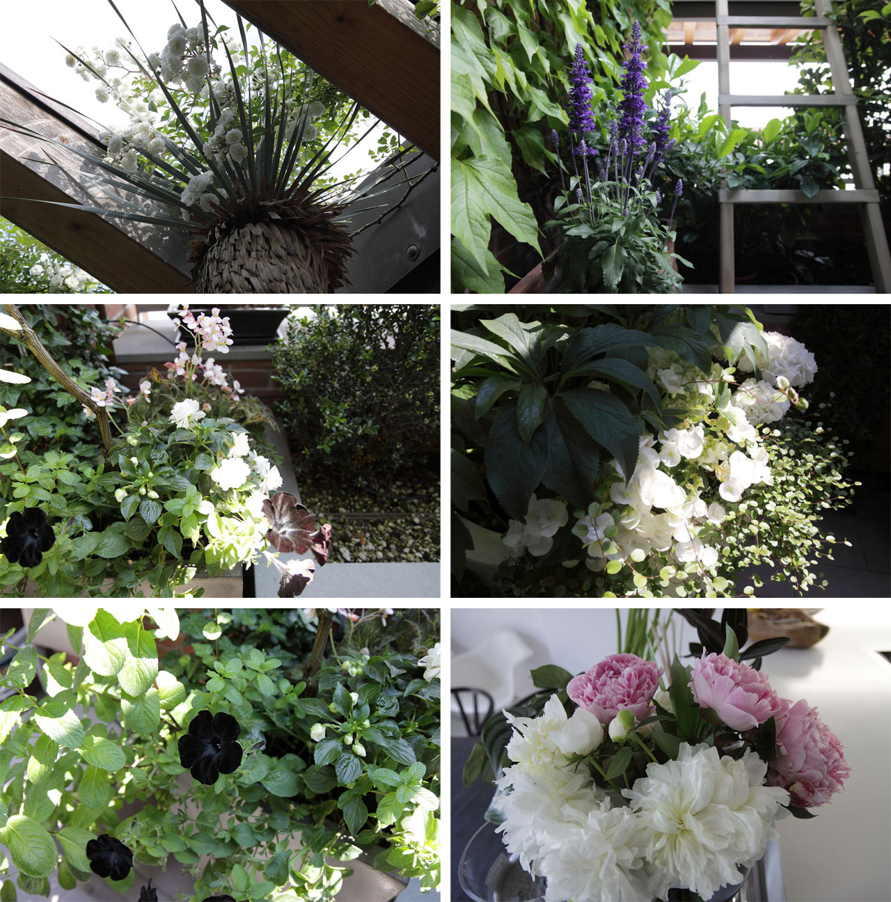 The flowers and plants that fill the small terrace.